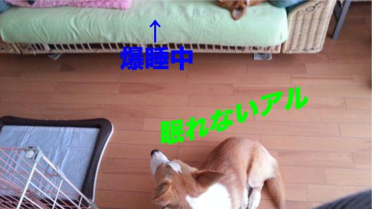 2_20131219171513266.jpg