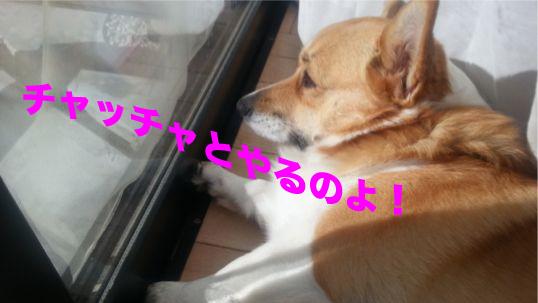 2_2013122411021570e.jpg