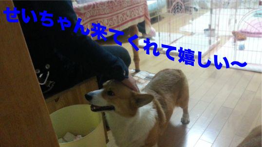 3_20131216100125cf1.jpg