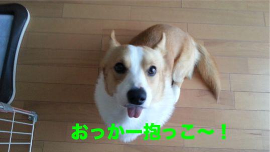 3_20131219171514289.jpg