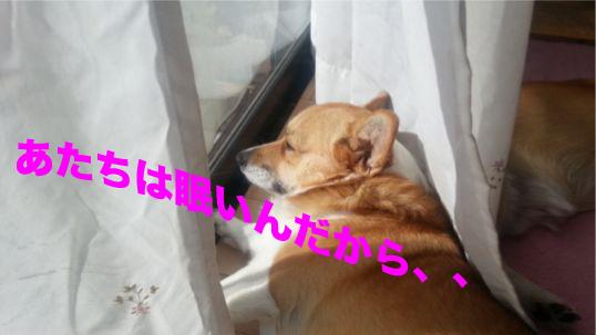 3_20131224110216878.jpg