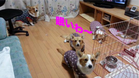 3_20131227111640771.jpg