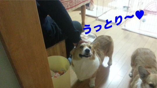 4_201312161001260f4.jpg