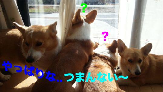 4_20131226135002aef.jpg