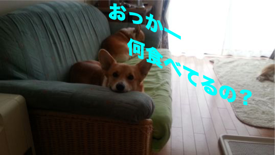6_201312131011323dc.jpg
