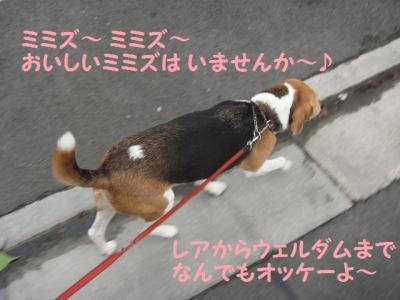 散歩 2 ひなちゃん