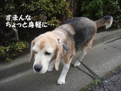 散歩 4 うんこ