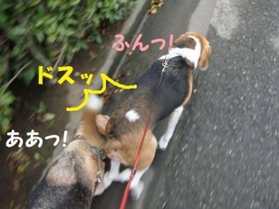 散歩 9 当て逃げ