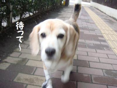 散歩 9 待って~