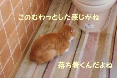 猛暑 1 トイレ