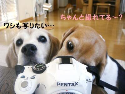 報復 4 カメラマン
