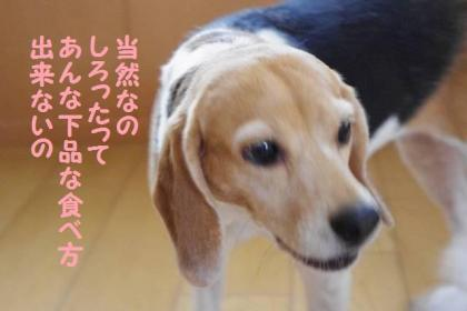 お土産 9 楽勝