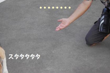 散歩 6 ぷい