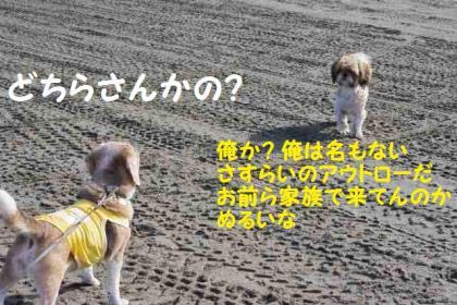踏んだり 10 さすらい犬