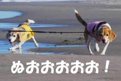 蹴ったり 8 並んで走る犬