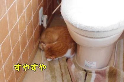 絶対音感 2 トイレでぐっすり