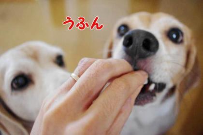 侍女 8 対犬