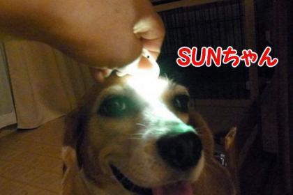 SUNちゃん