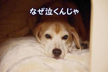 涙 1 爺イン犬部屋