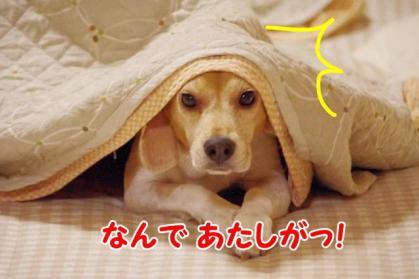 涙 4 目くじら