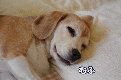 ぽっかぽか 3 笑う犬