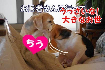 カイカイ 4 ちう1