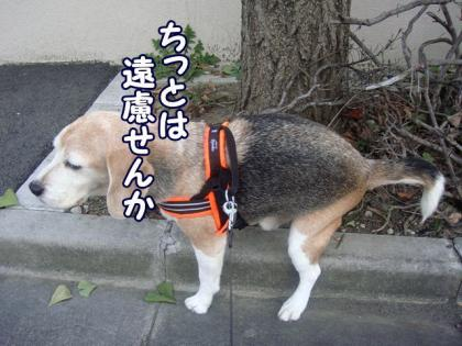 散歩 3 うんこOK