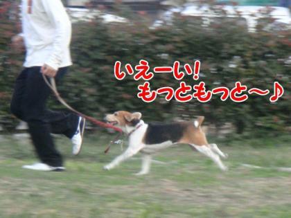 散歩 5 ひなちゃん