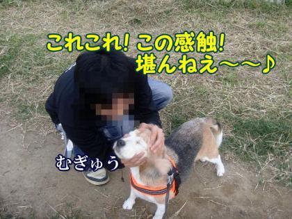 散歩 9 犬史郎