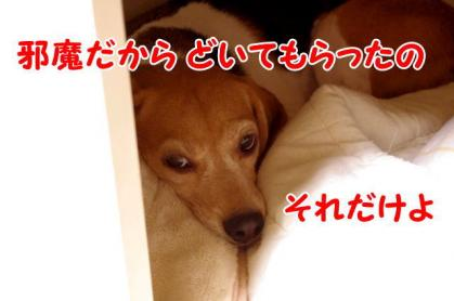 変化 6 犬部屋の主