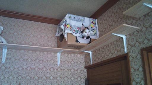 konatsucyan2010101603.jpg
