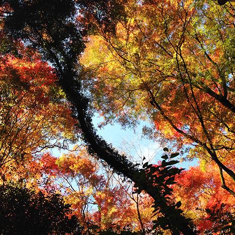 箕面 紅葉狩り1