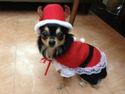 クリスマス 035