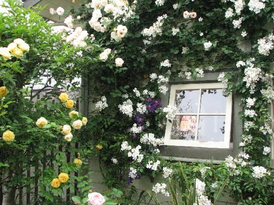ガーデンカフェ・グリーンローズ2011_06