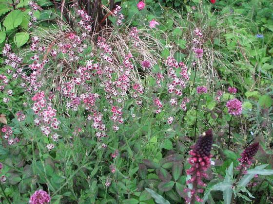 毛呂山の庭2011_06#2