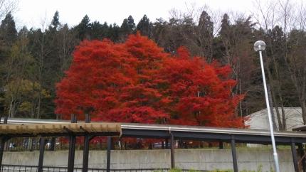 DCIM0231紅葉