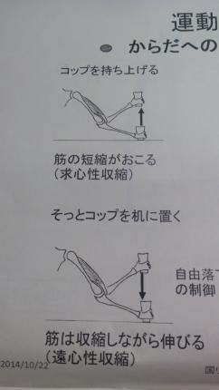 DCIM0266筋肉