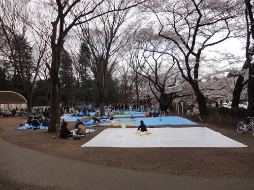 井の頭公園 桜 2012