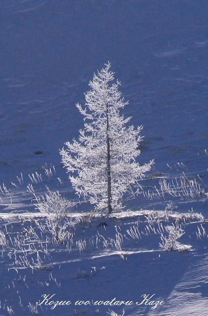 冬の情景20