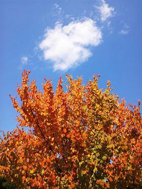 オキニイリの木