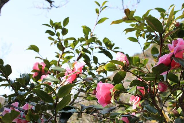 110223IMG_1300鎌倉瑞泉寺