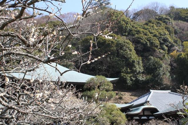110223IMG_1301鎌倉瑞泉寺