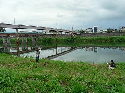 白石川千本桜沿いの河川敷き続き