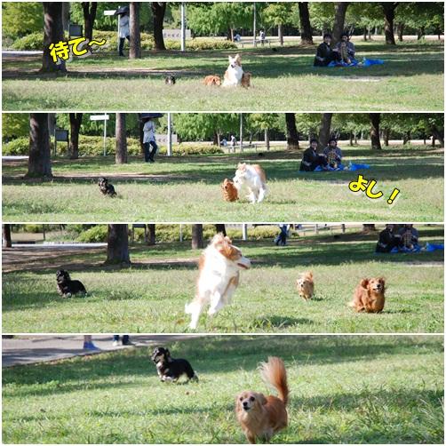 cats26.jpg