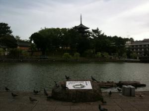 sarusawa0903_convert_20110903114418.jpg