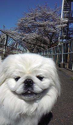 H24.4 中津川遊歩道