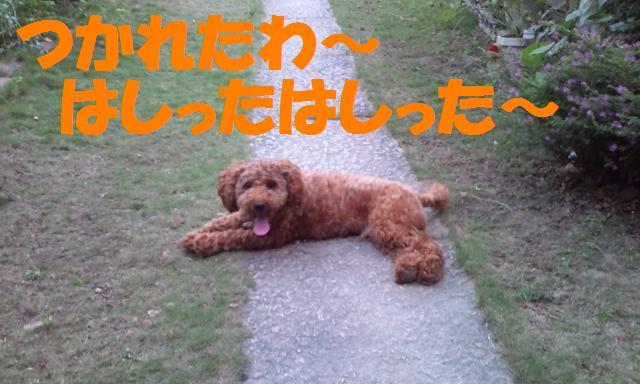 20110925180041.jpg