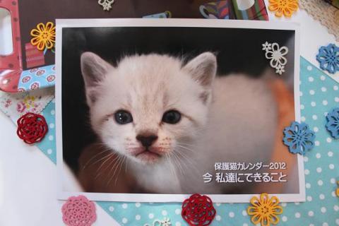 2012年保護猫カレンダー281096_1316101389