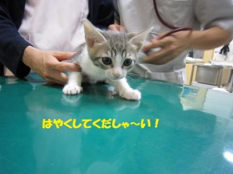 IMG_3743.jpg