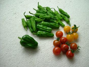 tomato収穫